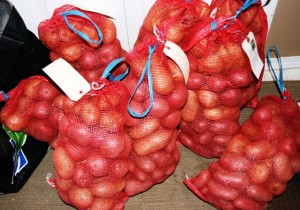 each of these bags is 10 pounds of potatoes. So imagine 50 of these...and a few potatoes on the side.